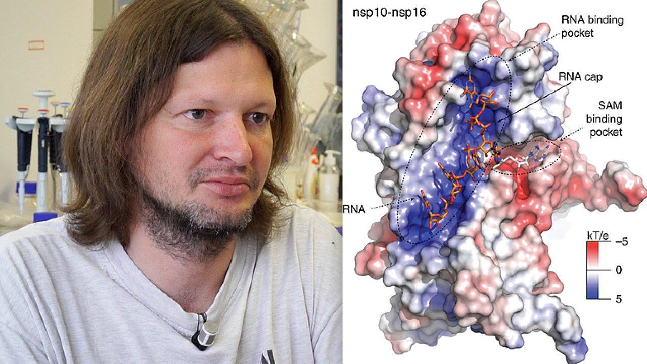 Objev českých vědců: Koronavirus se chytře maskuje, staví si čepičku jako lidská RNA.