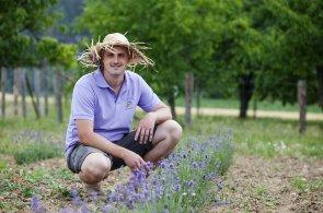 Místo řepky pěstují levanduli. Supermarketům ji neprodají, jde do zákusků i kávy