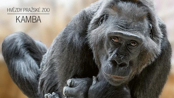 Fotografická kampaň Zoo Praha 2017