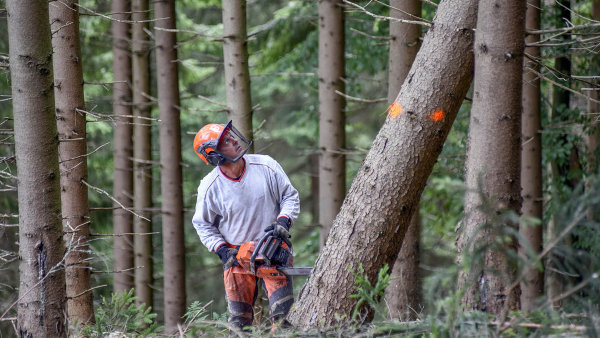 Celý tendr Lesů ČR 2018+ má hodnotu 2,8 miliardy korun - ilustrační foto.