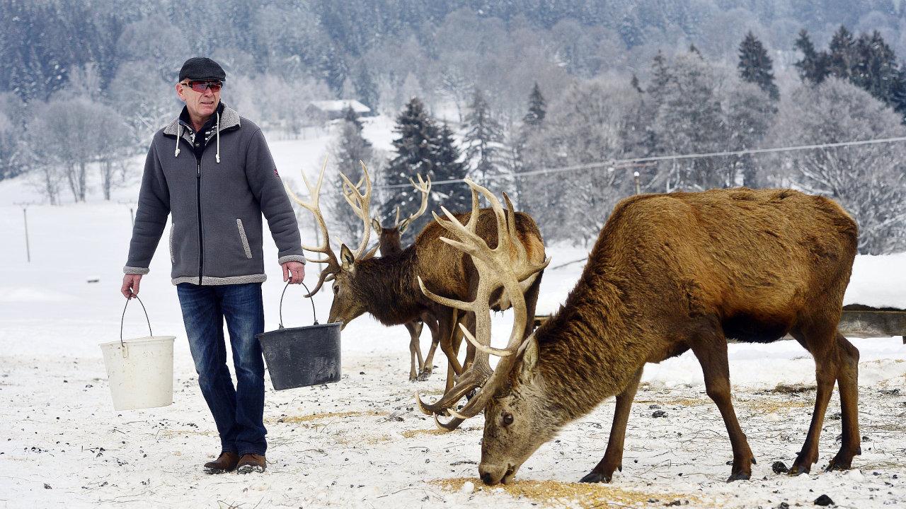 Farmář Pavel Vokál chová na Šumavě jeleny (na snímku), daňky, lamy, skot i ovce.