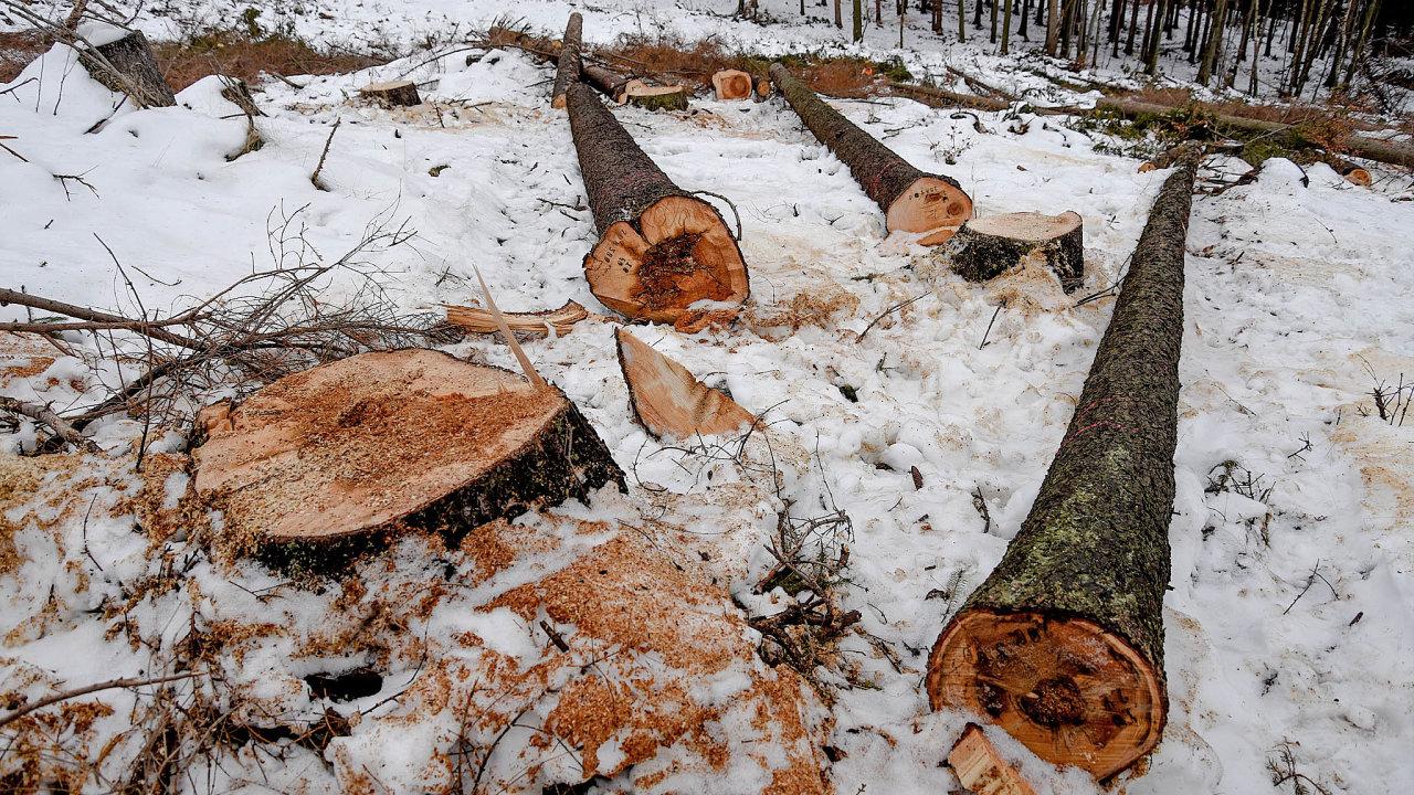 Souše nechte stát. Nová vyhláška umožňuje lesníkům soustředit síly nastromy, zekterých kůrovec ještě nevylétl.