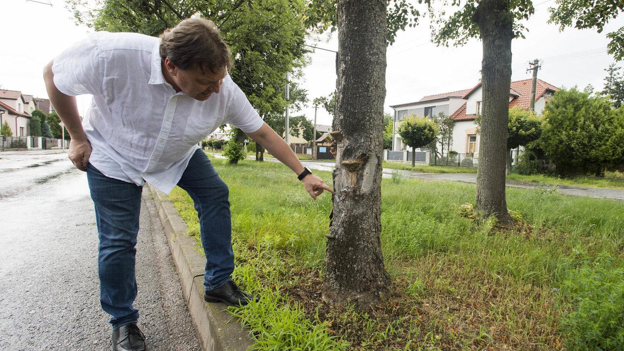 Následky vedra: Stromy na ulicích vHradci Králové chřadnou, ukazuje vedoucí odboru životního prostředí královéhradeckého magistrátu Libor Rak. Komplikace mají ivodohospodáři.