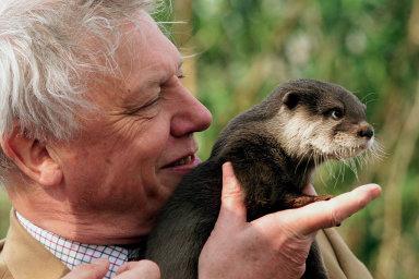 Devadesátičtyřletý přírodovědec Attenborough svým Instagramem překonal rekord. Milion sledujících získal za čtyři hodiny