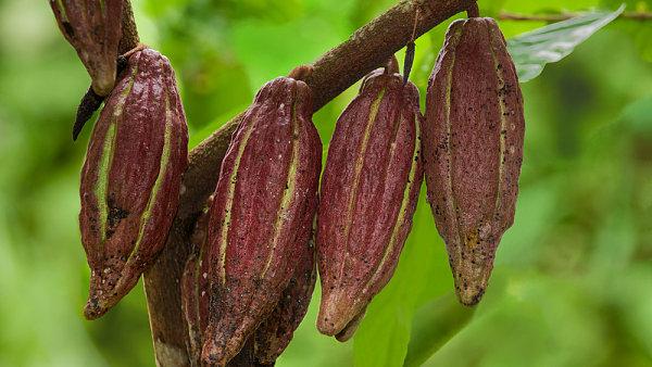Malé vesnice pěstitelů kakaa na Madagaskaru se staly cílem ozbrojených útoků, může za to vysoká cena na světových trzích.
