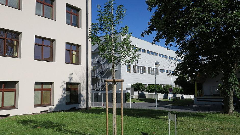 Jeden ze sedmi nových významných stromů v Praze, Strom válečných veteránů v ÚVN v Břevnově.