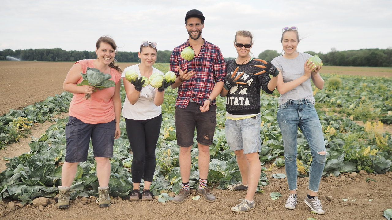 Sdružení Zachraň jídlo v Česku oživilo tradici paběrkování, tedy sbírání plodin, které zbyly po sklizni na polích či v sadech.