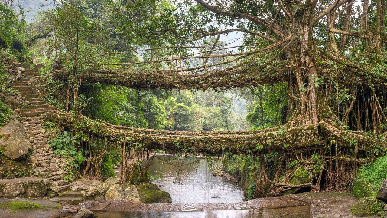 Živý most, Indie