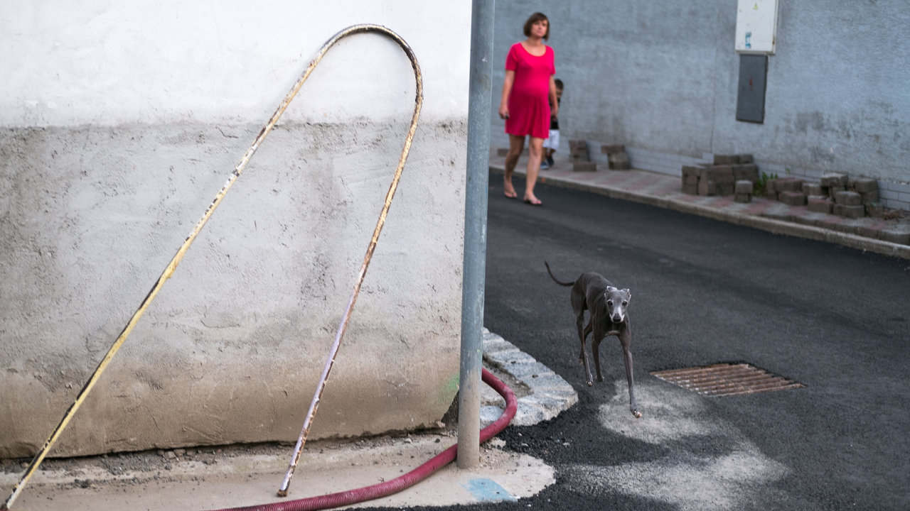 Hlavním tématem fotografií Davida Gaberleho je město. Snímek s chrtem patří k jeho nejoblíbenějším.