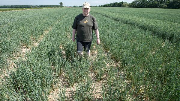 Sucho na plodiny působí stejně, jako když sprintera při startu přidržíte za trenýrky. Ztrátu už nesmaže, říká farmář