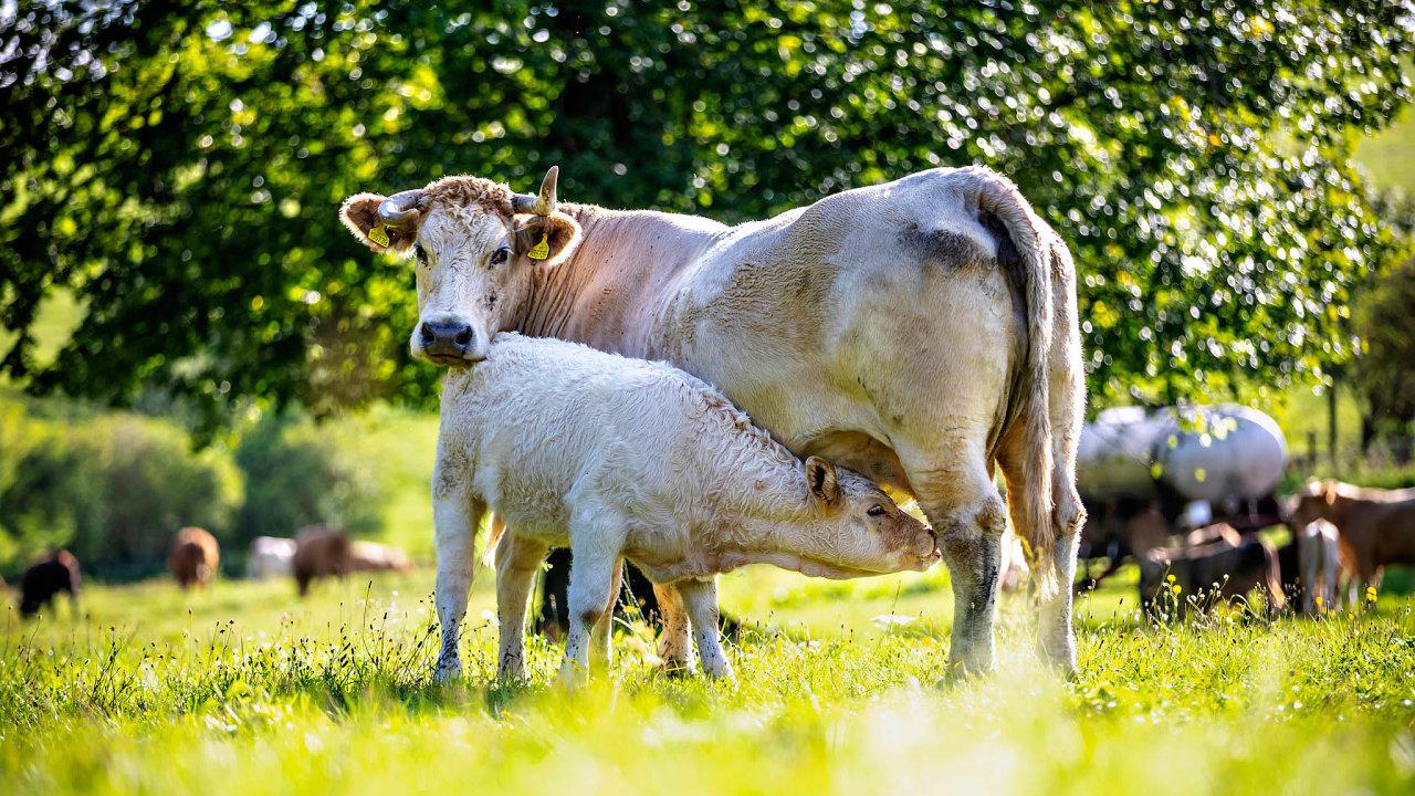 Maso zdobytku, který není vestresu ažije vpříznivých podmínkách, je chutnější. Opůvod masa se zajímá také stále více zákazníků, kteří vyžadují etičtější zacházení se zvířaty.
