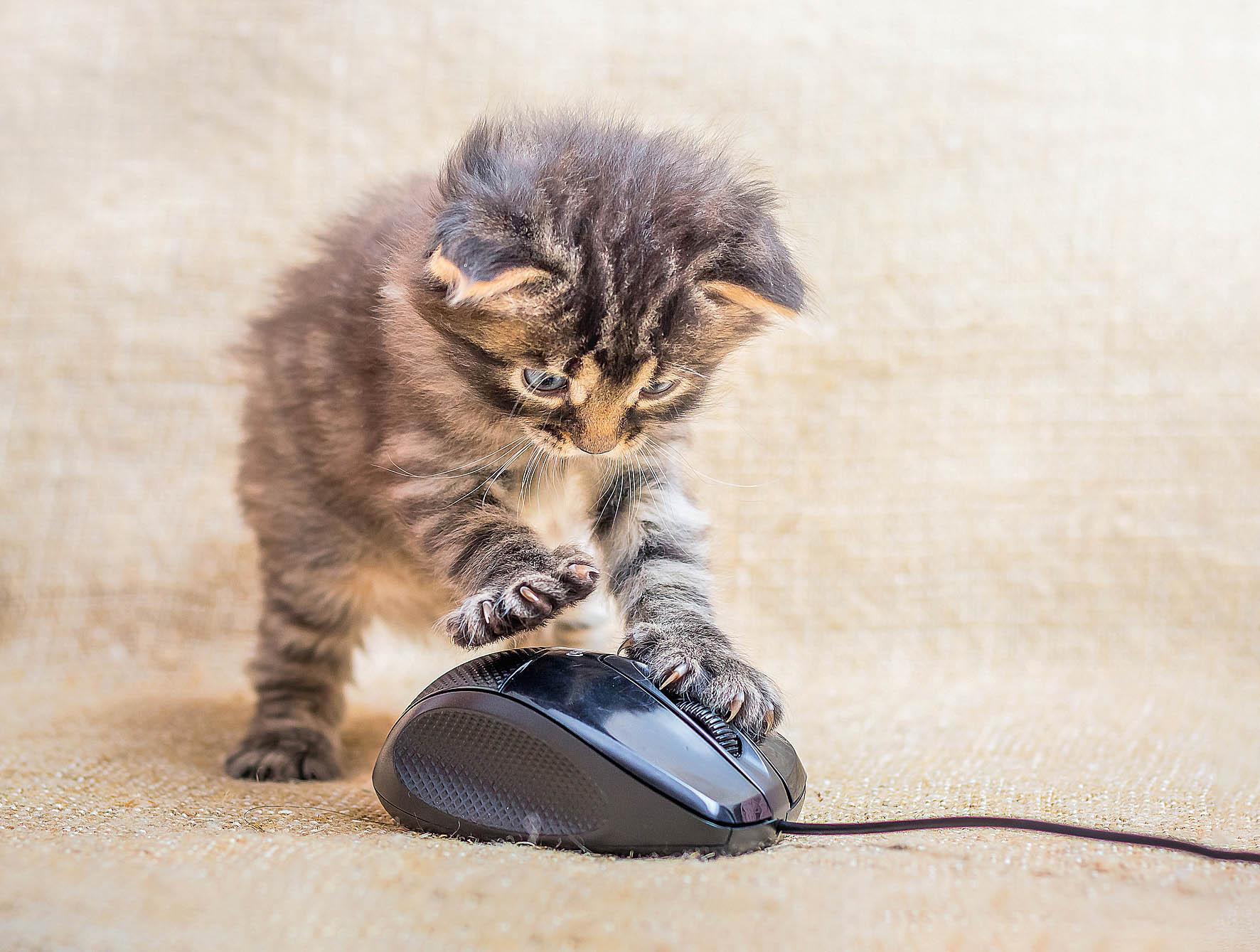 S kočkou se to zdá být jednodušší, protože z ní obvykle lidé strach nemívají.