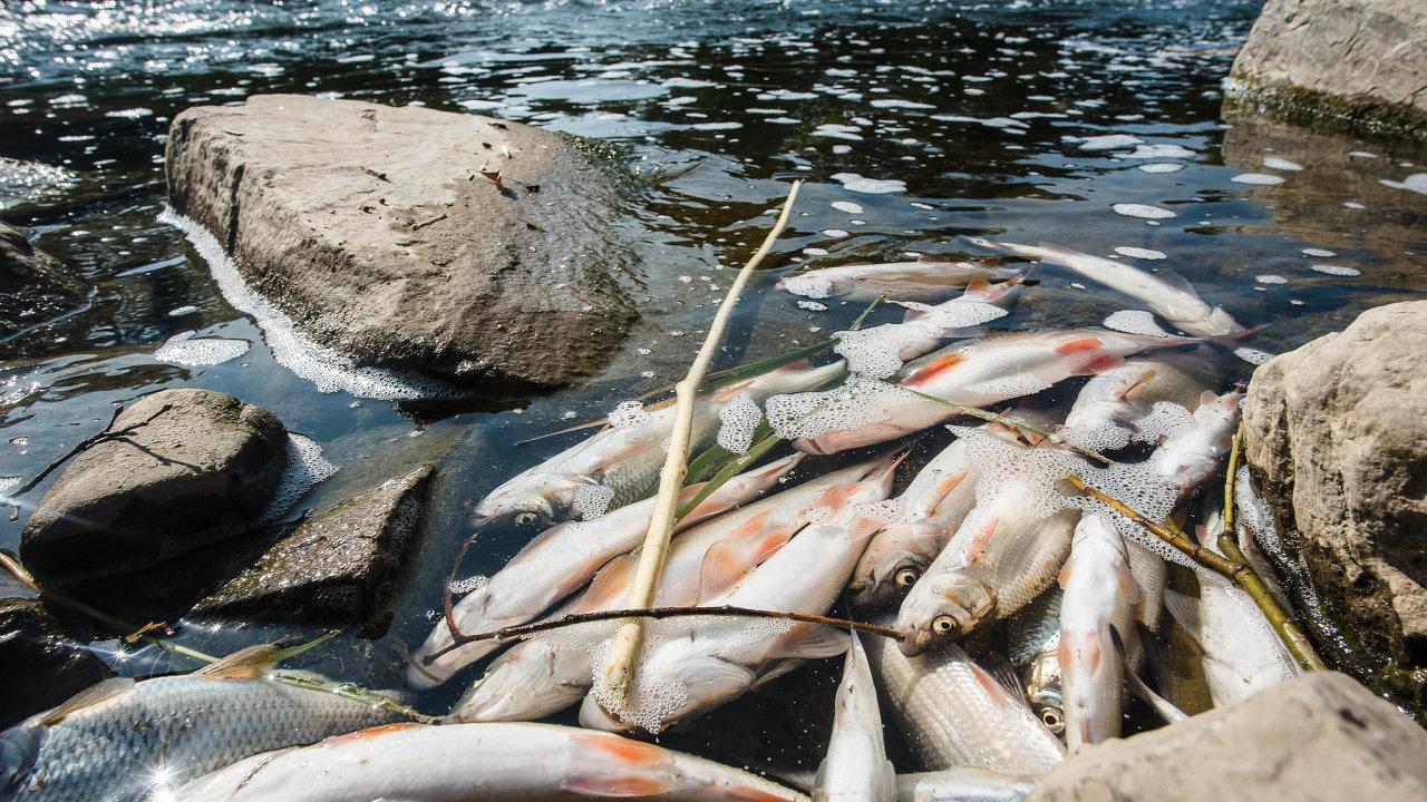 Policie obvinila firmu Energoaqua a jejího šéfa Oldřicha Havelku v červnu z poškození a ohrožení životního prostředí a neoprávněného nakládání s chráněnými volně žijícími živočichy.