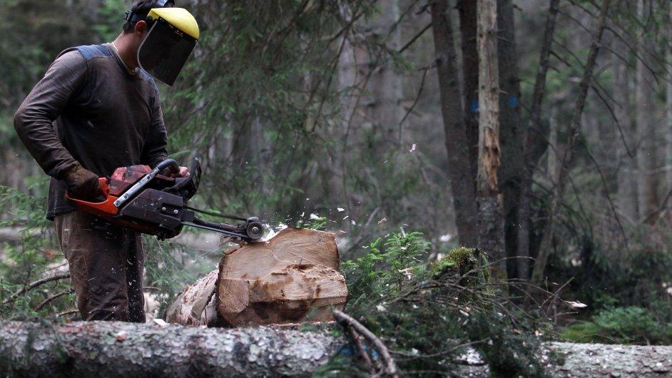 Kácení stromů, ilustrační foto