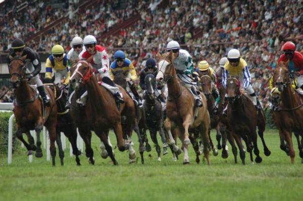 Koně v rovinovém dostihu
