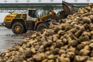 Donesnází se dostalo všech pět firem, které vČesku provozují celkem sedm cukrovarů.