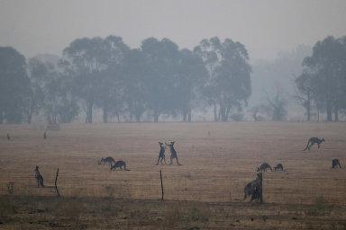 Část Austrálie vyhlásila stav nouze, úřady evakuují tisíce lidí. Požáry se mohou ještě zhoršit