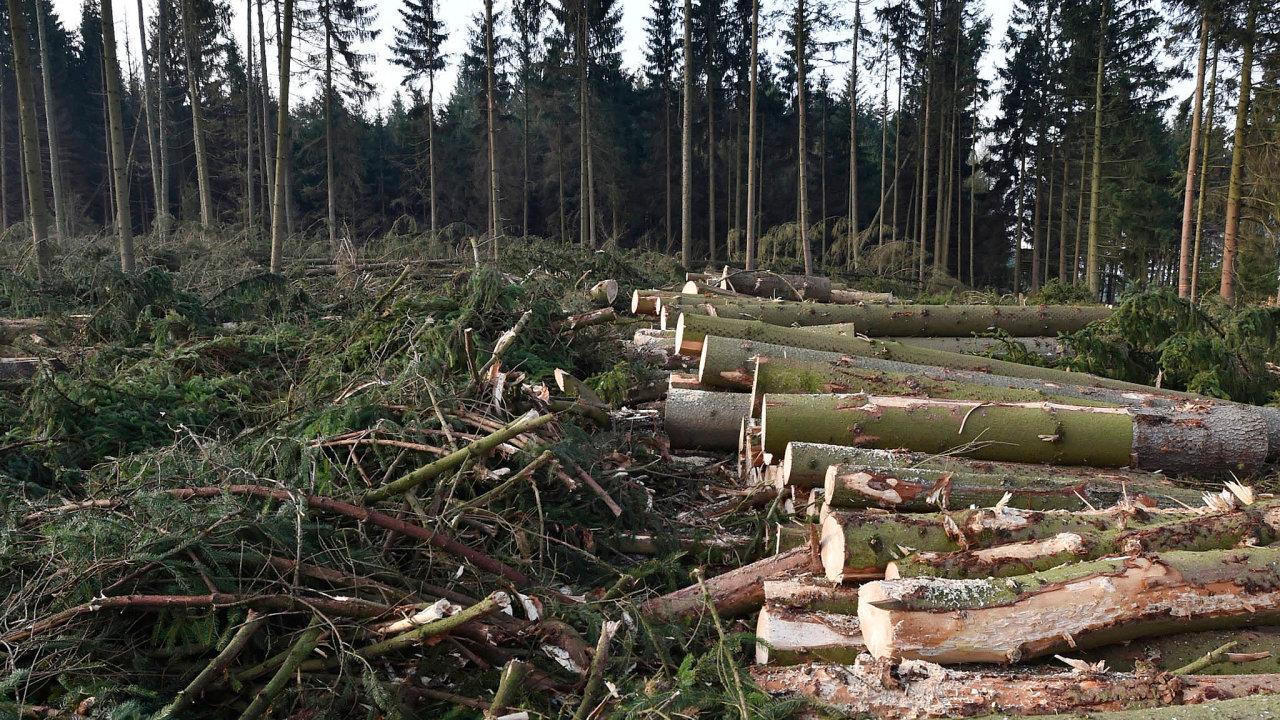 Létají třísky. Při kácení lesů vzniká spousta zbytků, které lze rozdrtit nadřevní štěpku používanou venergetice.