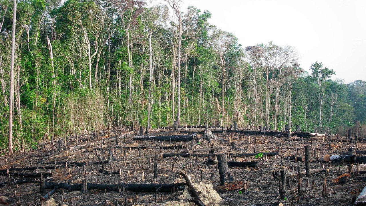 Brazílie je pod stále silnějším tlakem zahraničních firem, aby zasáhla proti odlesňování amazonského pralesa. Prezident Jair Bolsonaro tvrdí, že jeho země musí využít Amazonii kesvému rozvoji.