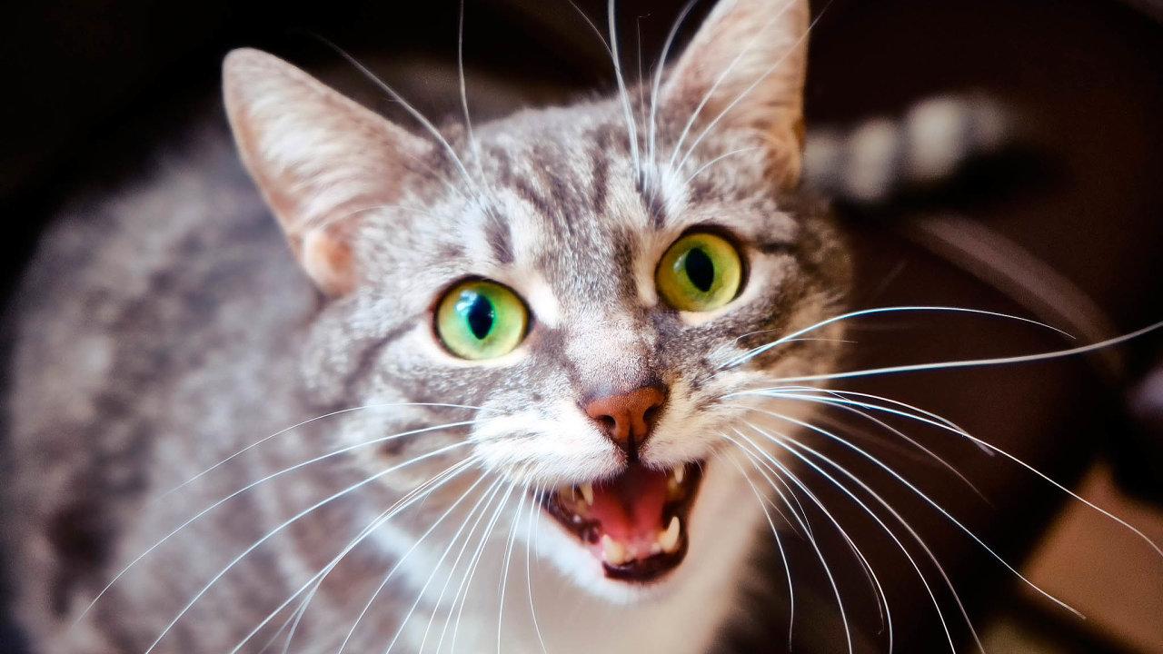 Bývalý IT expert Amazonu Javier Sanchez vytvořil aplikaci schopnou přeložit kočičí