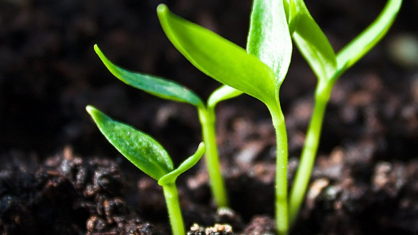 Cenu biopotravin zvedají méně intenzivní metody hospodaření i větší objem lidské práce.