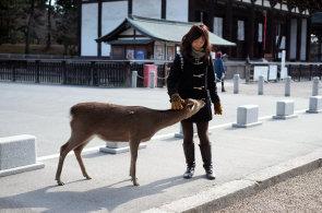 V japonsk� Na�e uct�vaj� jeleny jako posv�tn�, �ije jich tu p�es tis�c a mohou se proch�zet po cel�m m�st�