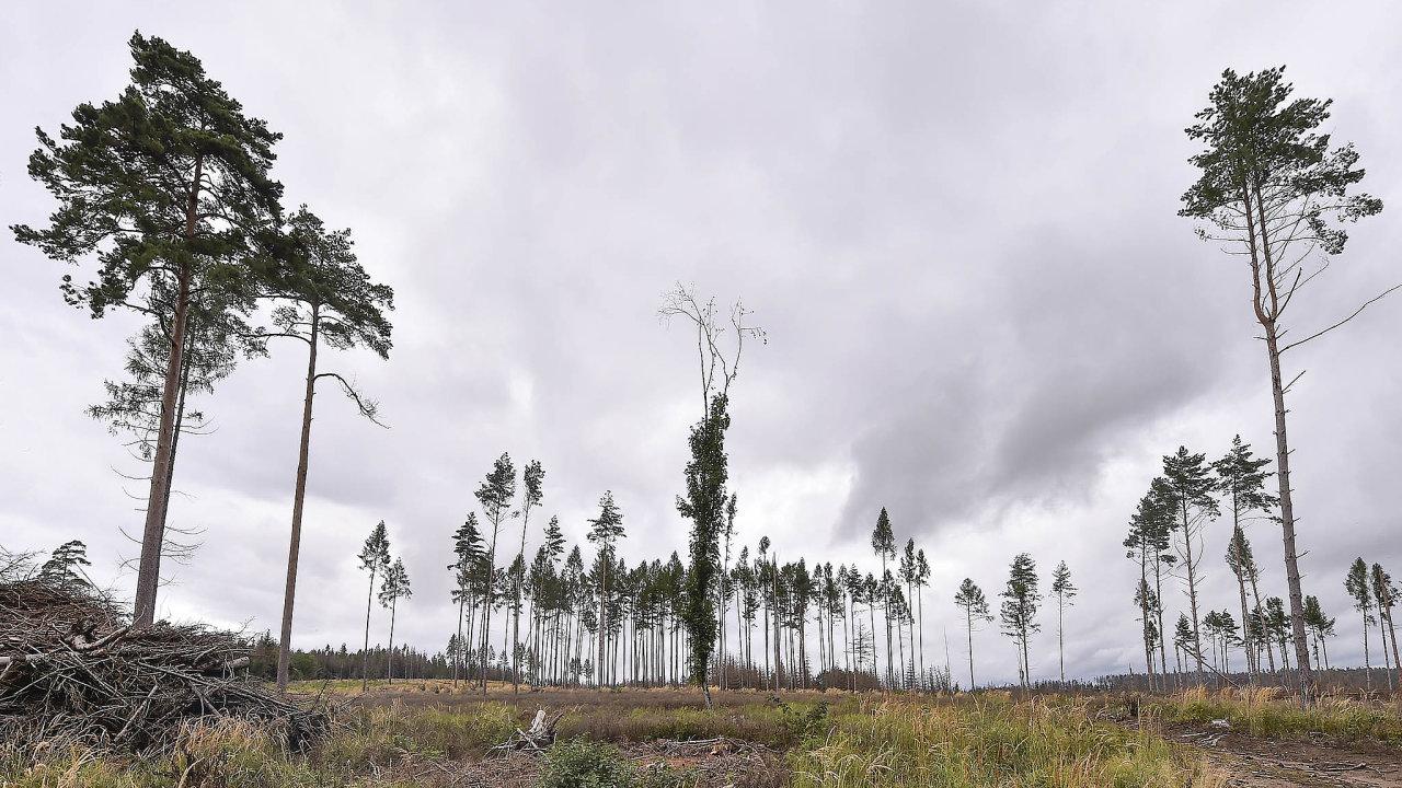 Kalamita se šíří. Také lesy u Dačič byly napadeny kůrovcem a byly z velké části vykáceny.