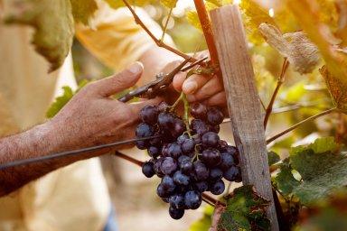 Francouzští vinaři požadují, aby vláda vPaříži vytvořila fond nakompenzace vcelkovém objemu 300 milionů eur, jež by měly vyvážit dopad amerických cel.