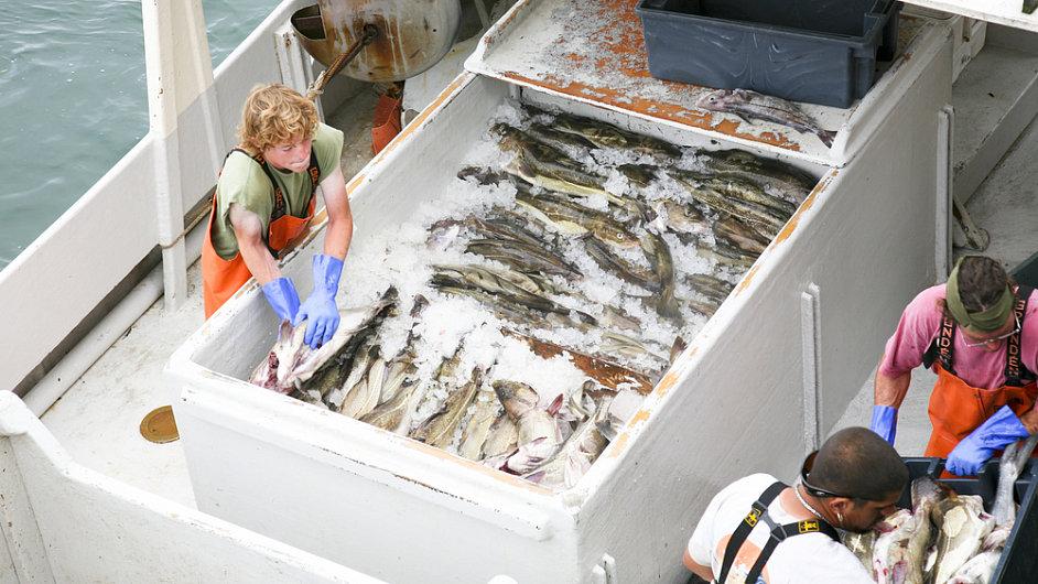 Rybáři zmrazí ryby hned po ulovení, na pevnině se pak rozmrazí a často také