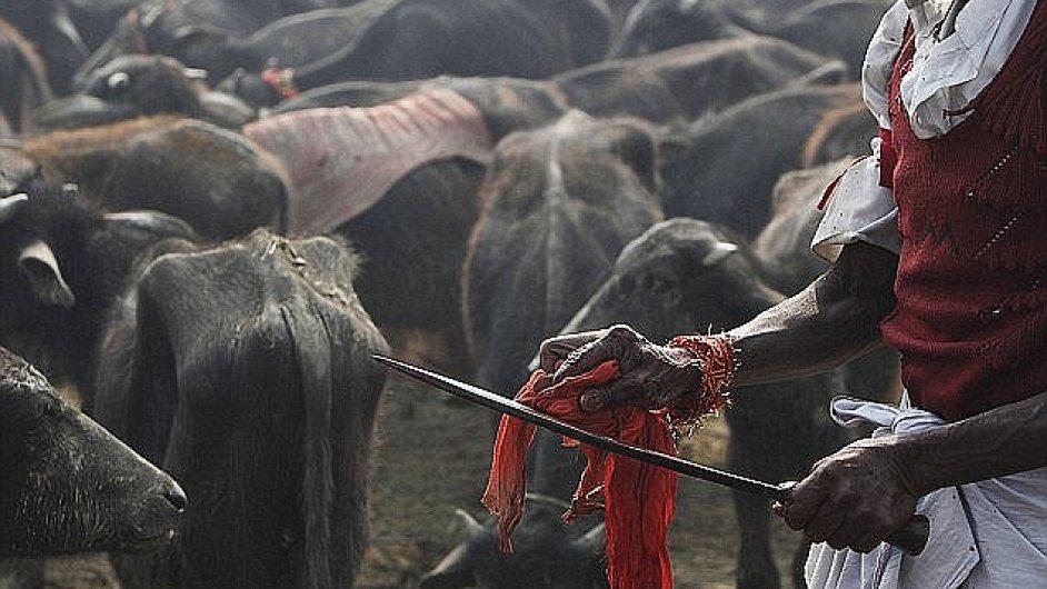 Nepál se promění v jatka. Za oběť bohyni Gadhimai padnou statisíce ... 0f3d80e889