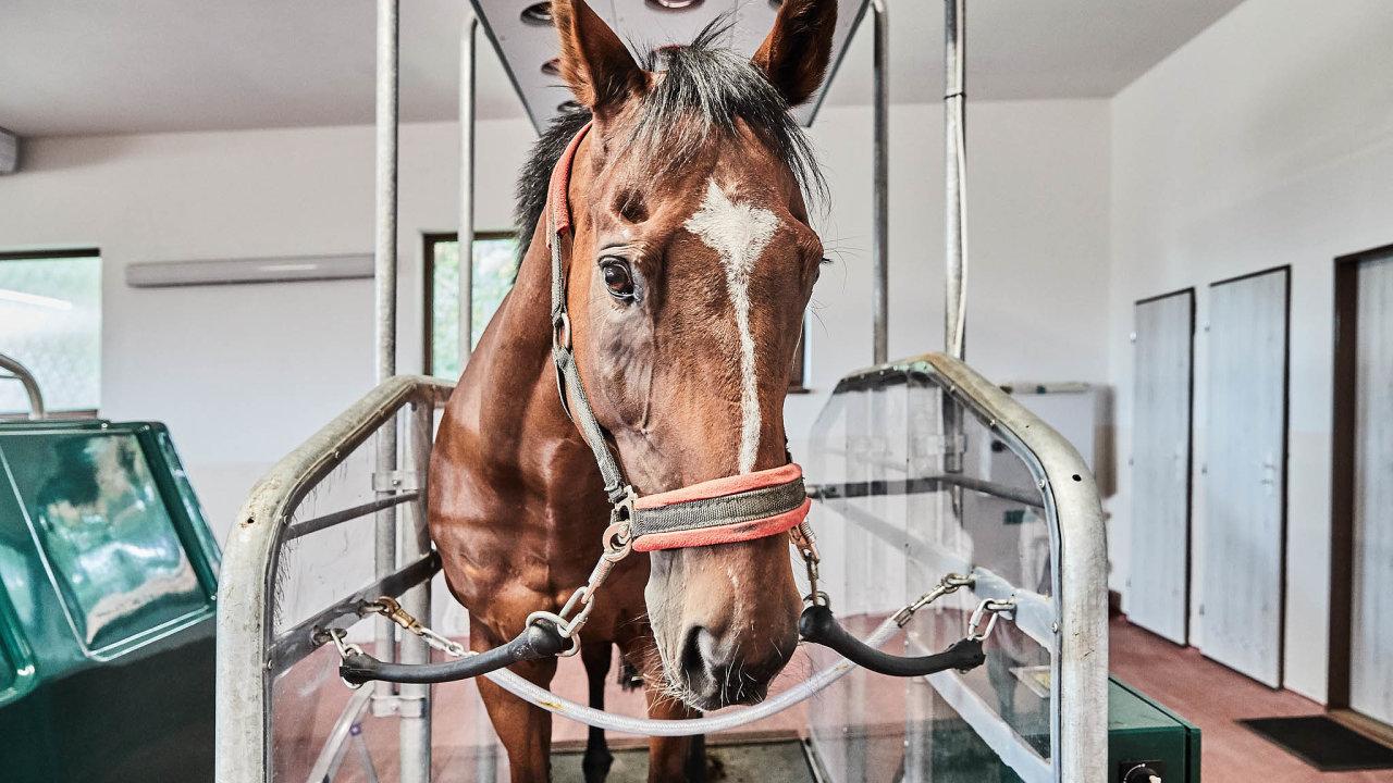 Koňští šampioni si ponáročném tréninku zaslouží prvotřídní péči.