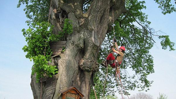 I stromy si zaslou�� odborn� o�et�en�.