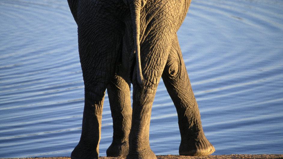 V národním parku Etosha na severu Namibie lze vidět slony i žirafy, vzácněji pak buvoly nebo lvy.