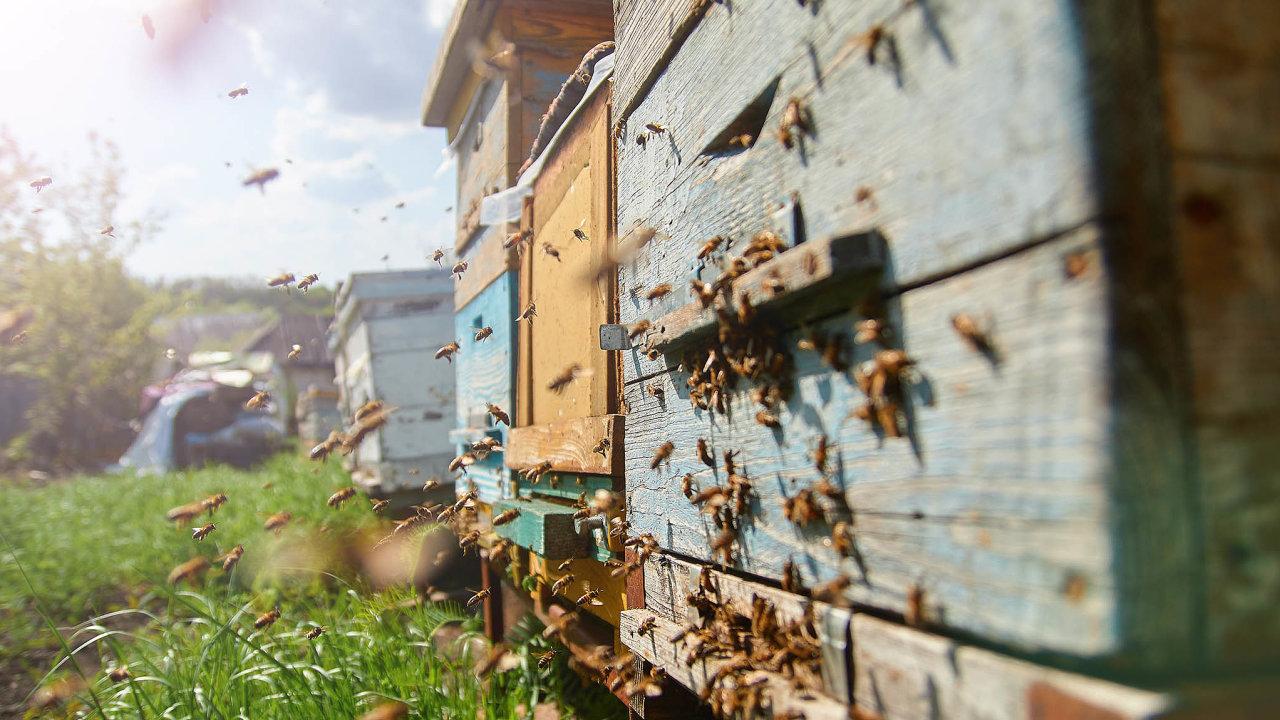 Letošní zimu vČesku nepřežila zhruba pětina včelstev.