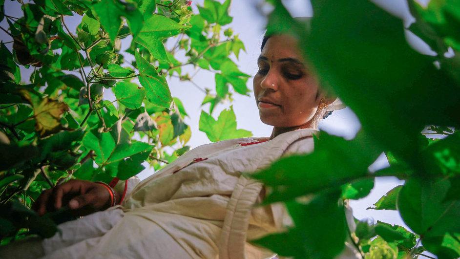 Svět indickou bavlnu potřebuje, platí se zani relativně dost peněz ajejí pěstování anásledné zpracování nejsou zase tak složité.