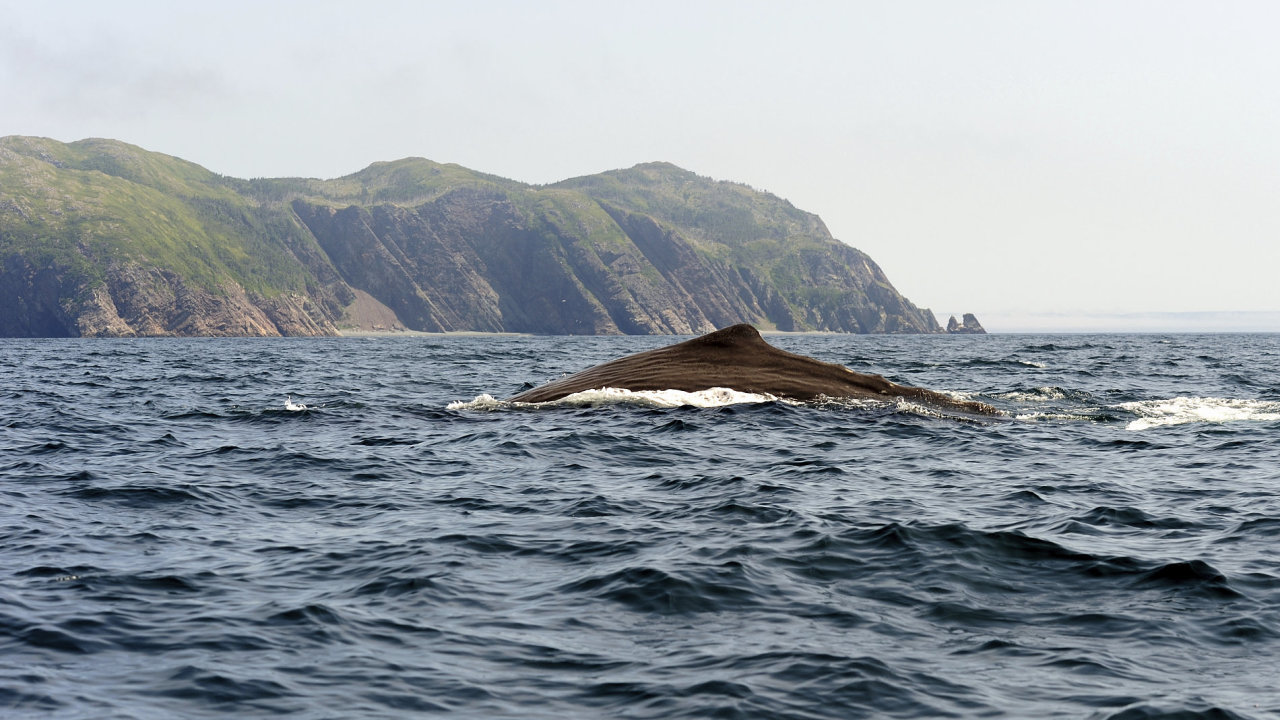 Ohrožené velryby