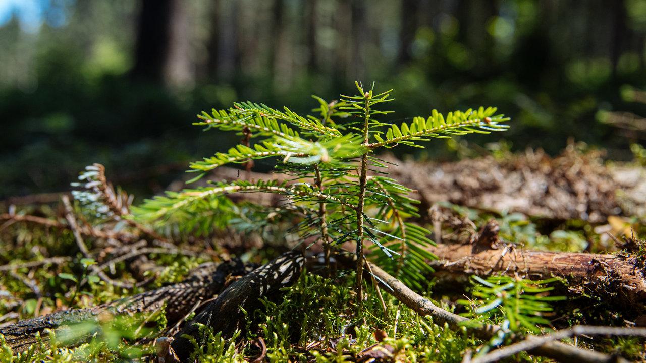 Na vzrostlé nové lesy budou lesníci čekat desítky let.