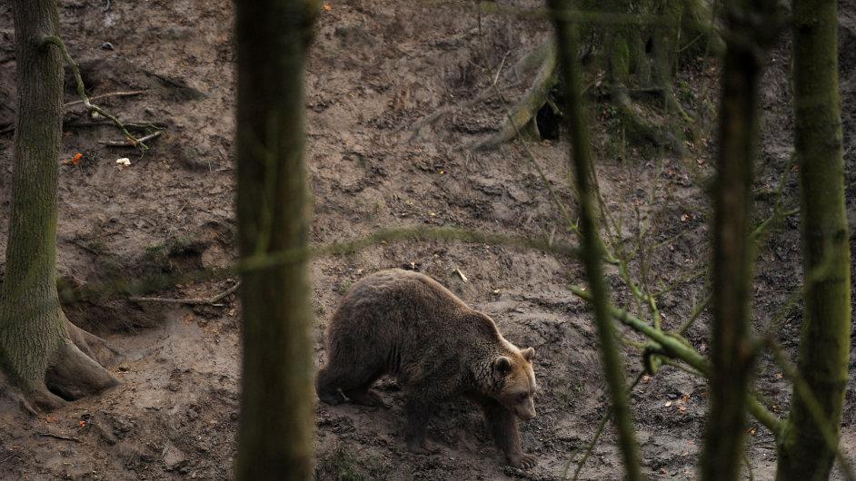 Na Vsetínsku se stále pohybuje medvěd - Ilustrační foto.