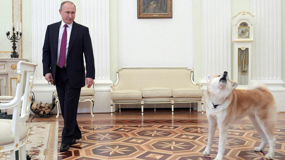 Pes obranář: Vladimir Putin dostal štěně rasy Akita Inu jako oficiální dar od japonské delegace v roce 2012. Nyní se s ním pochlubil před cestou do Japonska novinářům.