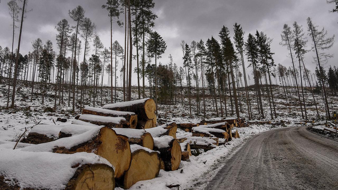 Zničeno už bylo vzemi podle různých odhadů 150 až 200 tisíc hektarů smrkového lesa celkem z1,3 milionu hektarů. Celková rozloha lesů vČesku je téměř 2,7 milionu hektarů.