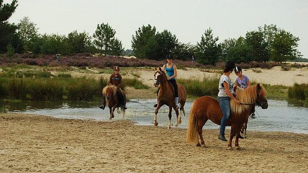 Projížďku na koních si objednejte v Loop op Zand.