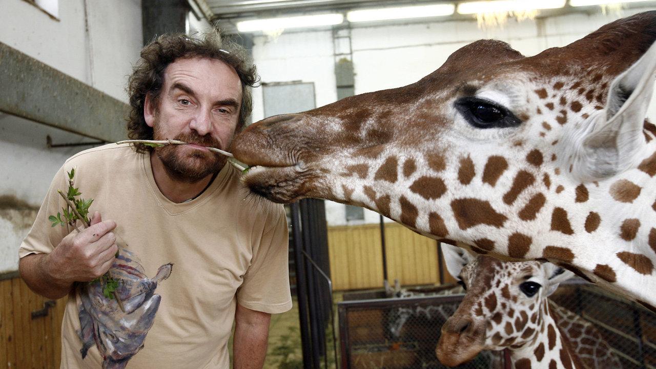 Víkend: Zoo a safari Dvůr Králové nad Labem. Na snímku ředitel Přemysl Rabas a žirafa Rothschildova.