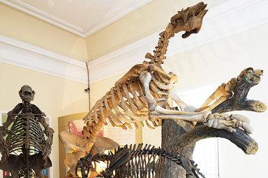 Kostry obřích lenochodů nebo mumie s vlasy. Prohlédněte si exponáty, které zničil požár brazilského národního muzea