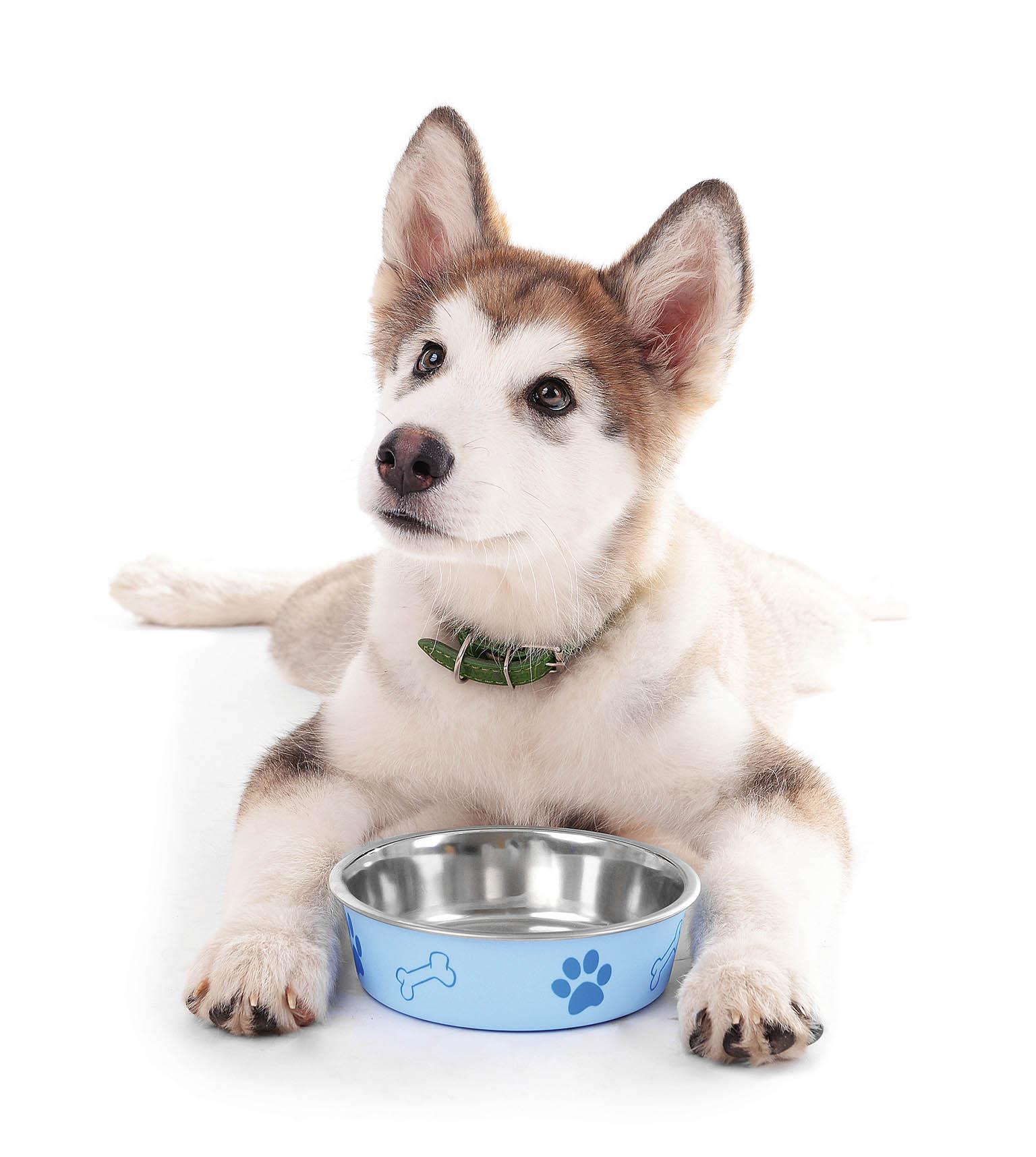 """Největším oříškem bývá pro nového majitele psa výběr granulí, přitom základní pravidlo velí jasně: """"Dávejte mu to, naco je zvyklý."""""""