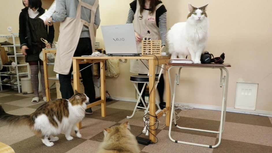 Kočky - ilustrační foto