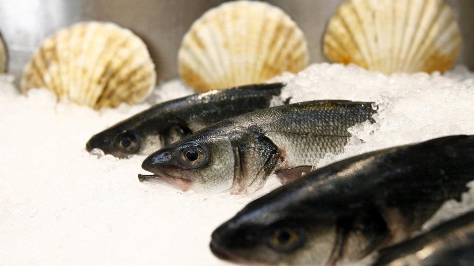 Mořské ryby - ilustrační foto.
