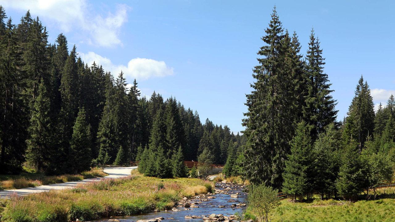 VNárodním parku Šumava je smrk doma už přes devět tisíc let. Skůrovcem si tam les poradí. Už pět let se tam smrky nevysazují, les se dokáže zmladit sám.