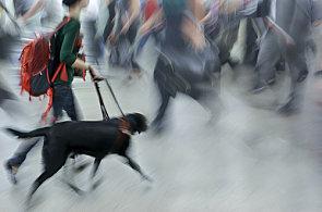 V Česku podpoří HSBC nadaci Leontinka, která pomáhá zrakové postiženým