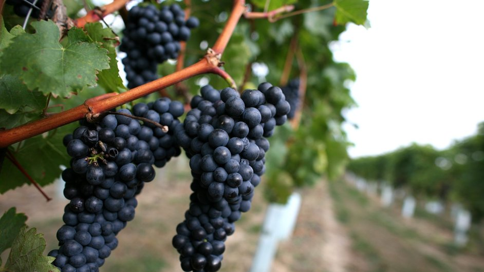 Víno - ilustrační foto