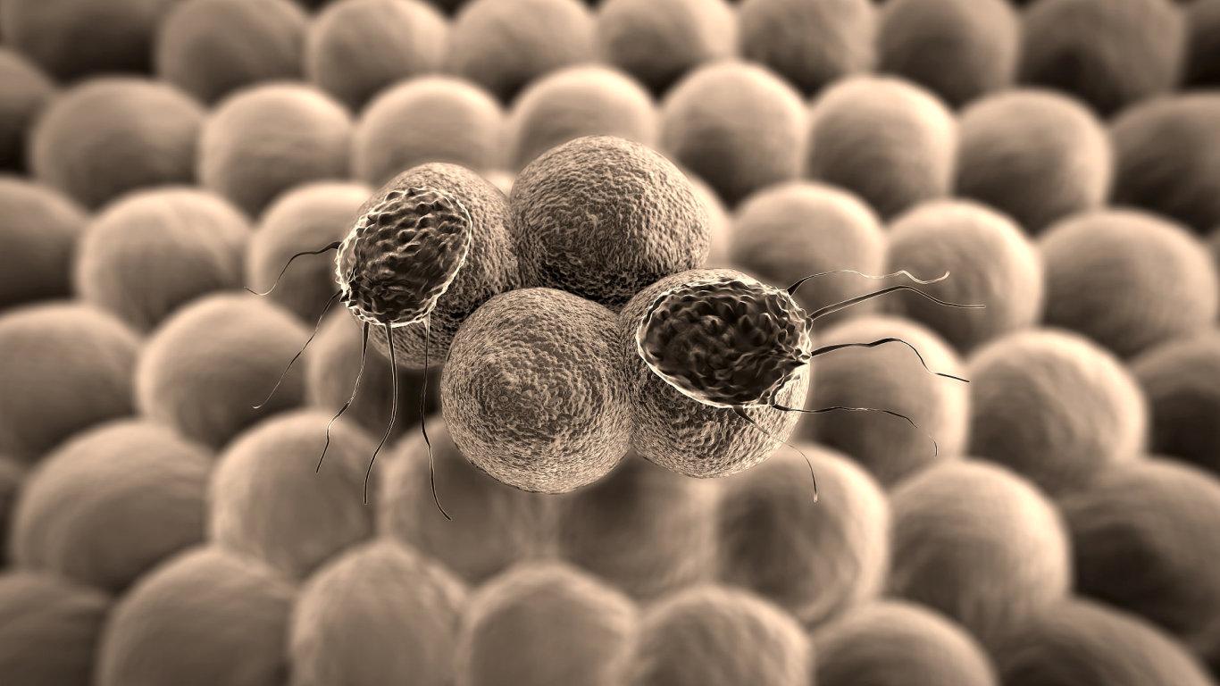 Rakovina - Ilustrační foto.